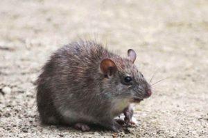 Viven en las praderas y bosques de Suramérica. Foto:Planet-Mammiferes.org. Imagen Por: