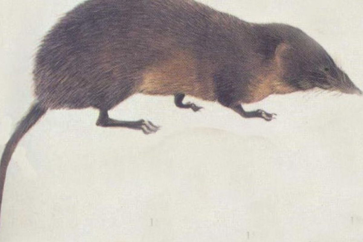 "De ahí a que se les llame ""runchos"" Foto:Wikipedia. Imagen Por:"