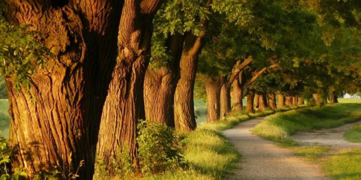 Estudio: Los espacios verdes mejoran la salud y reducen el estrés