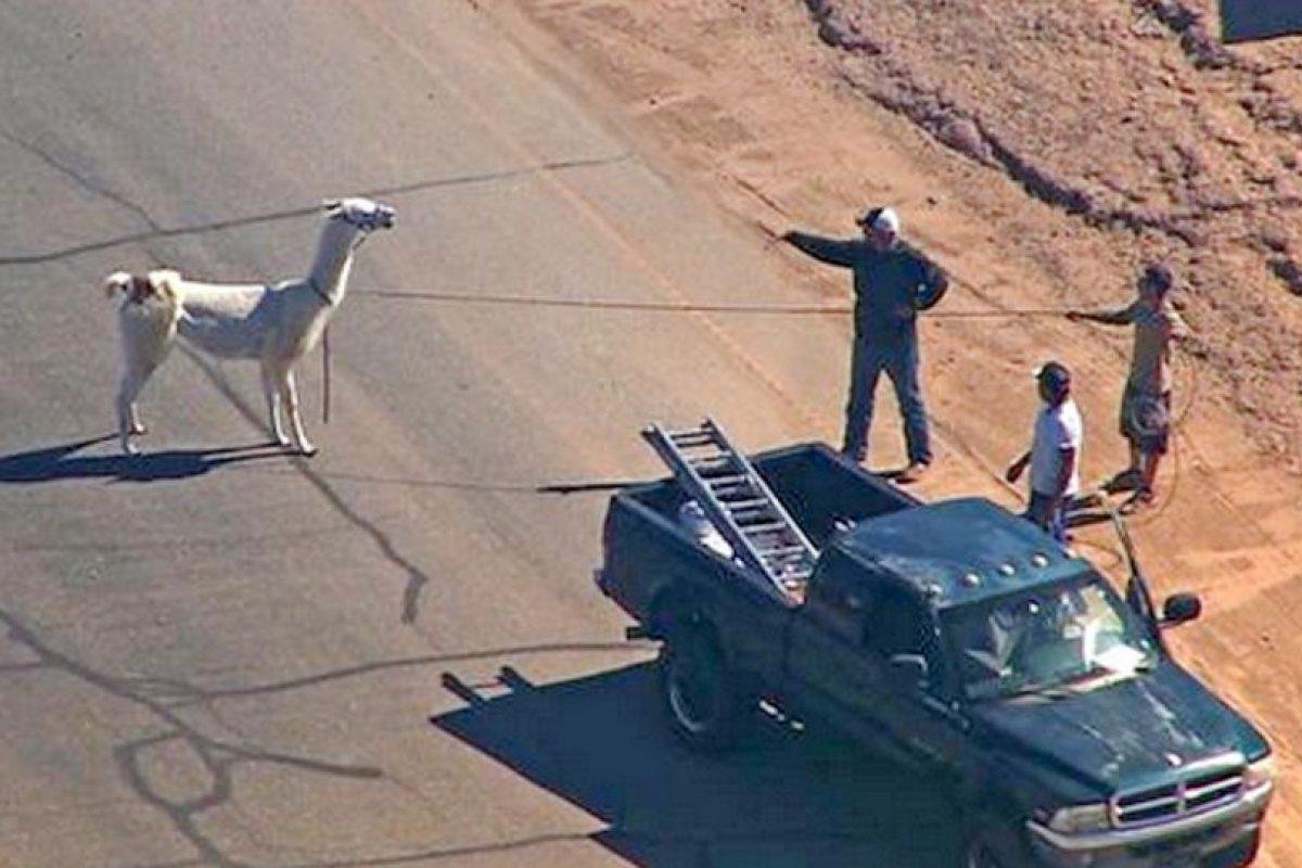 La persecución tuvo una duración de aproximadamente 10 minutos Foto:AP. Imagen Por: