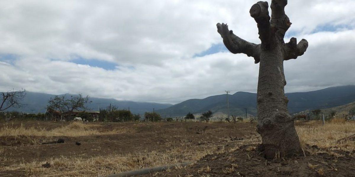 Sequía: Enero fue el mes más seco en el sur del país en últimos 50 años