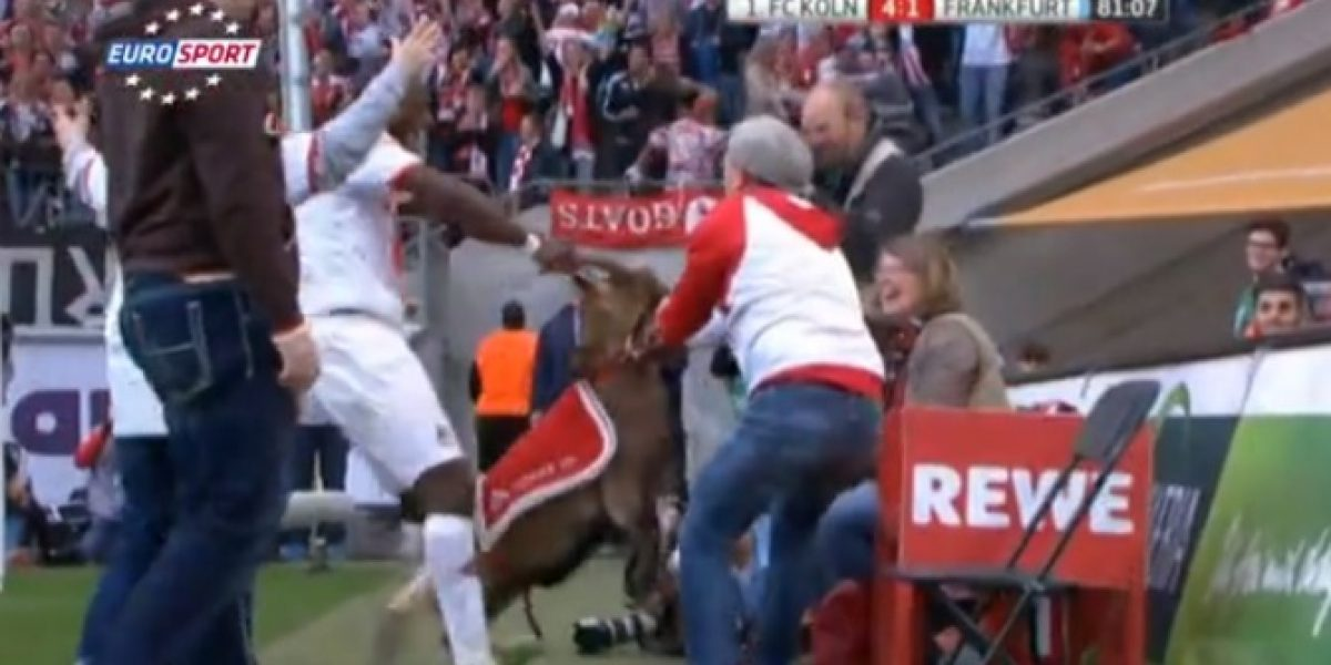 Lo hemos visto todo: en Alemania celebraron un gol con una cabra