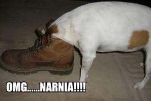 Cuando se comen nuestros zapatos Foto:Tumblr.com/tagged/perros-aprietos. Imagen Por: