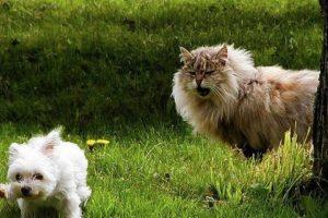 Foto:Tumblr.com/tagged/perros-aprietos. Imagen Por: