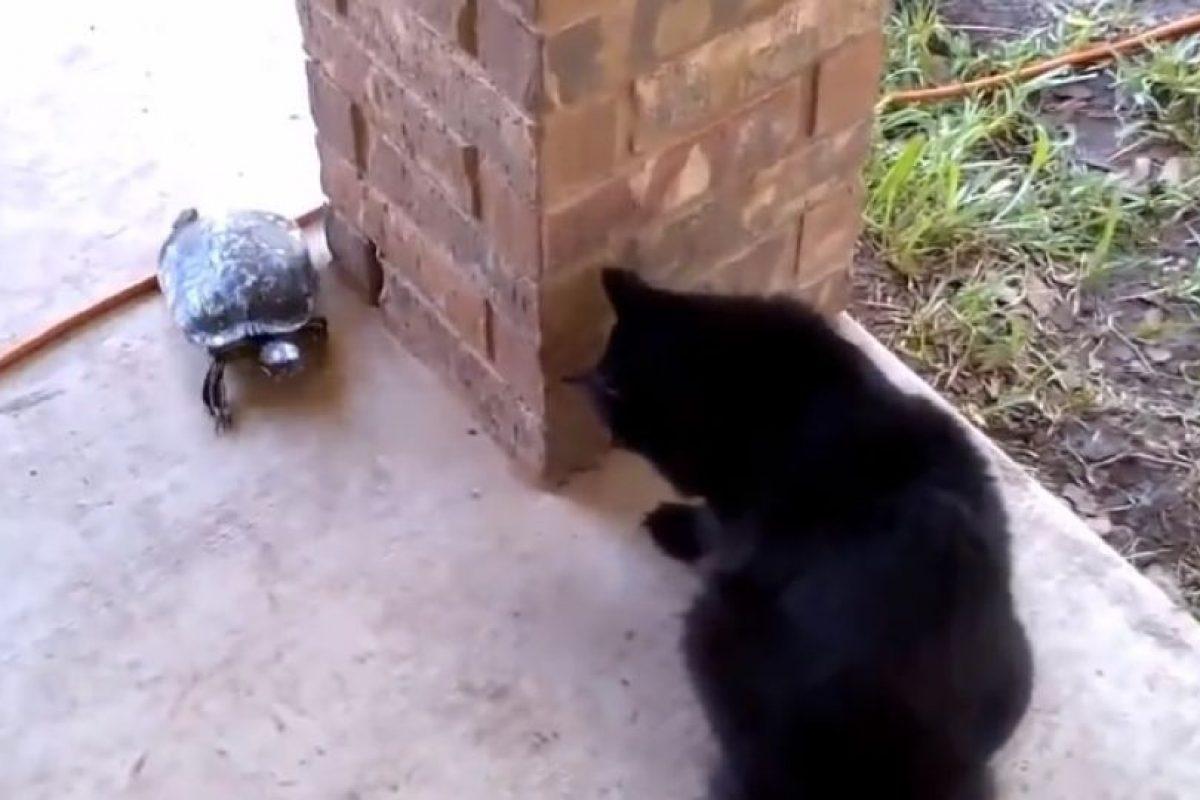 Foto:Vía Youtube: Catsss. Imagen Por: