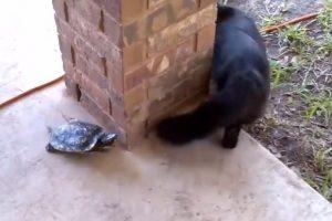 A continuación podrán observar que no son los únicos Foto:Vía Youtube: Catsss. Imagen Por: