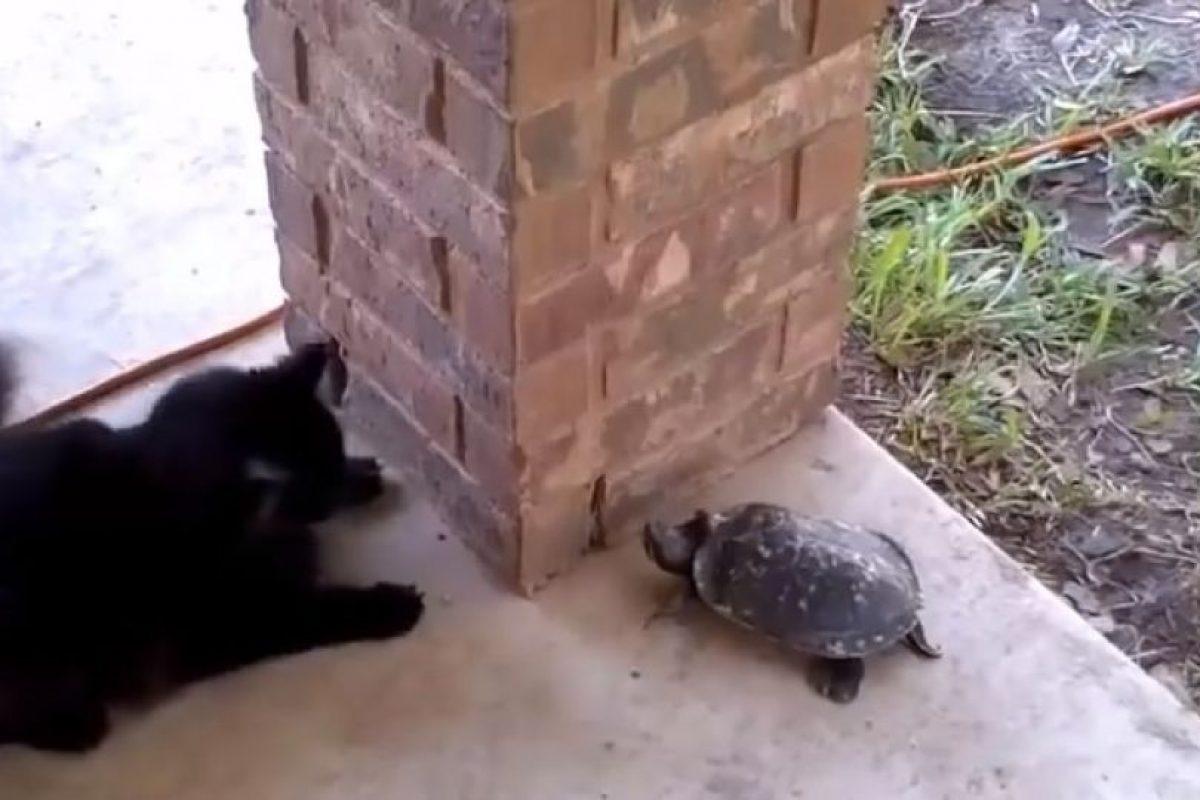 Nunca pensamos que estos animales se llevaran tan bien Foto:Vía Youtube: Catsss. Imagen Por: