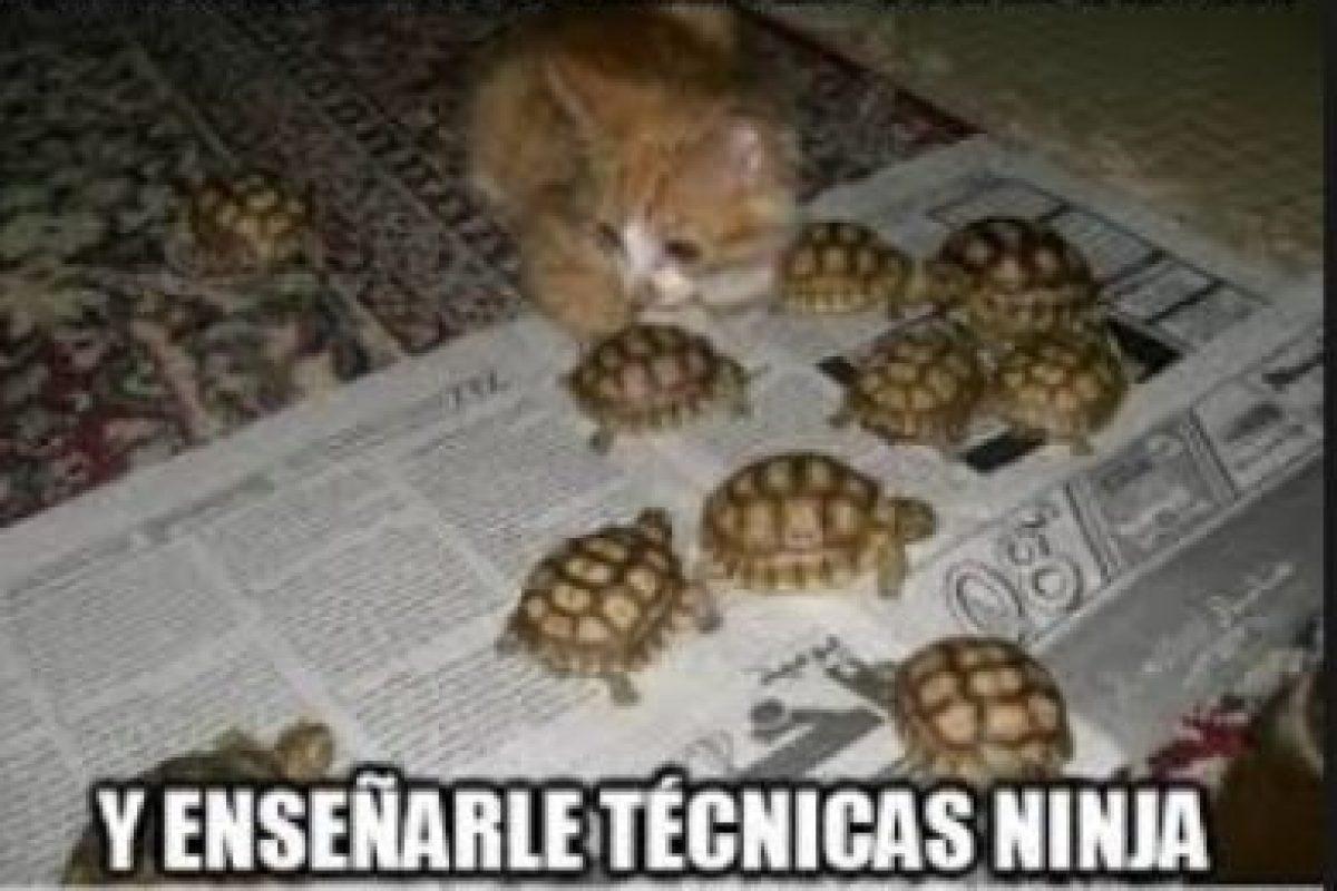 Foto:Gatosgraciosos. Imagen Por: