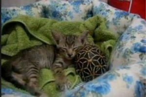 Nada más tierno que esto. Foto:Tumblr.com/tagged-gatos-tortugas. Imagen Por: