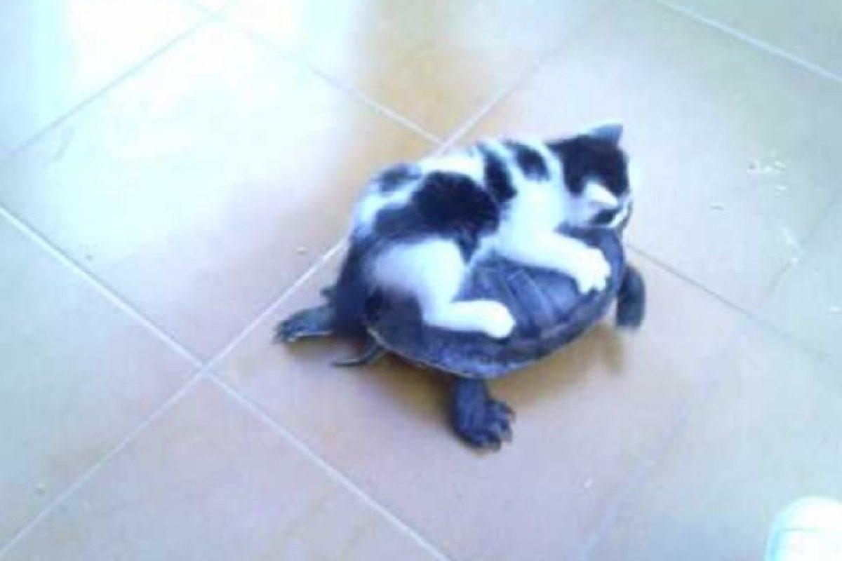 Vamos, ¡A toda velocidad! Foto:Gatosgraciosos. Imagen Por: