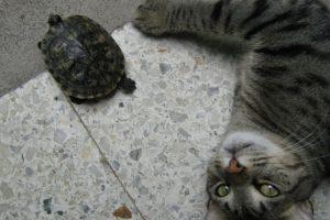 ¡Diversión! Foto:Tumblr.com/tagged-gatos-tortugas. Imagen Por: