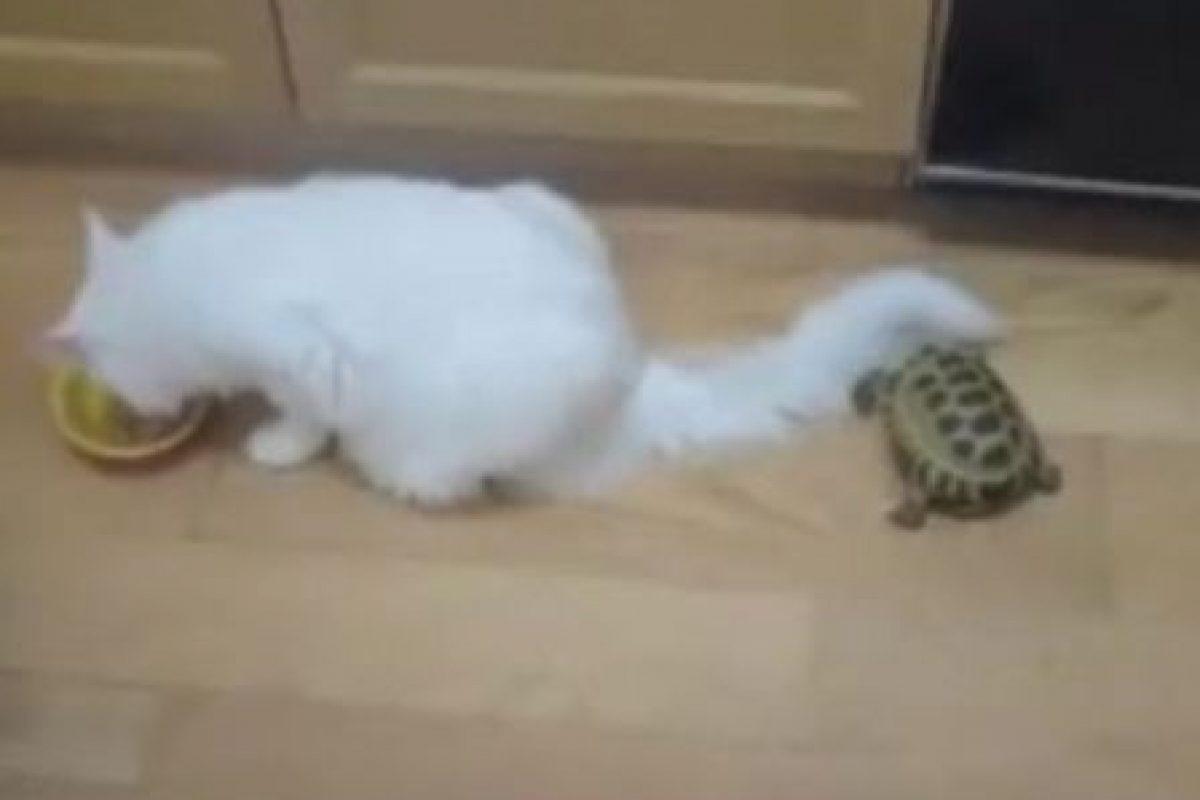 ¿Qué pretenderá hacer esa tortuga? Foto:Schnauzi. Imagen Por: