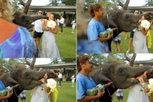 Típico, el elefante queriéndose comer a la novia. Foto:Adictamente. Imagen Por: