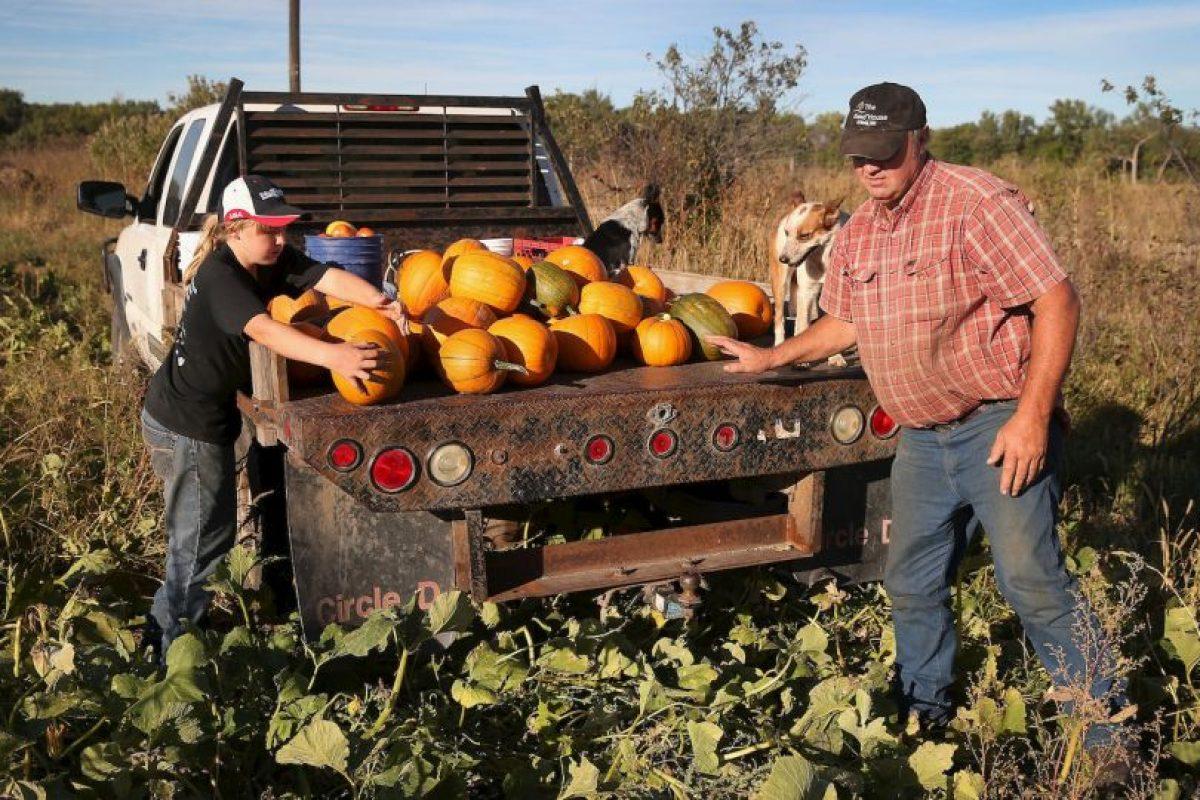 Una forma de sustentabilidad son los cultivos naturales, que lamentablemente son menos frecuentes en América Latina. Foto:Getty Images. Imagen Por: