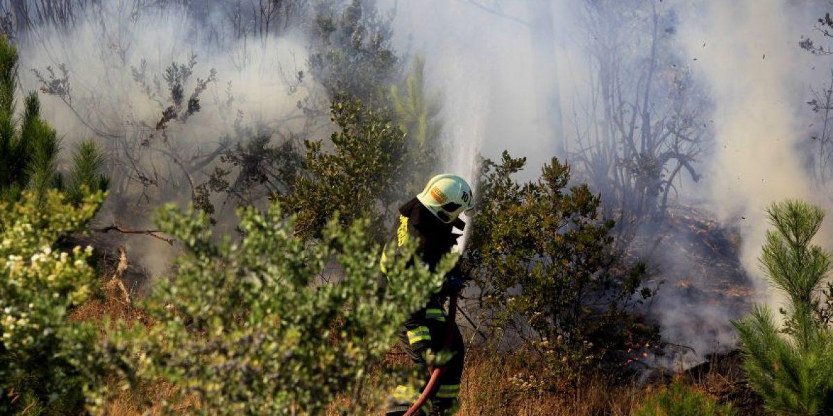 Incendio forestal causa interrupción de servicios de internet en el sur