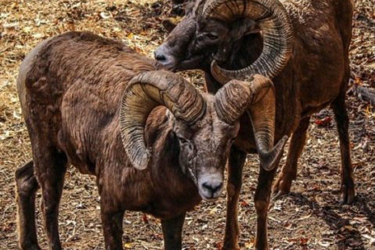 La noticia de que este animal procedente de Baja California en México se dio a conocer en el diario mexicano La Crónica. Foto:Pixabay. Imagen Por: