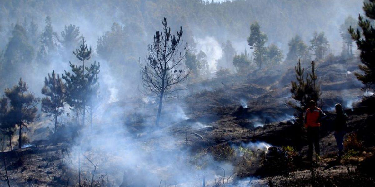 Incendios forestales: 75 mil hectáreas fueron afectadas durante este verano
