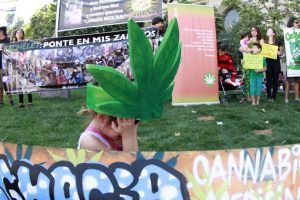 """Más de mil familias se manifestaron este miércoles en todo el país para exigir a Bachelet que deje de """"criminalizar"""" a los pacientes que utilizan la marihuana como parte de sus tratamientos y se """"ponga en sus zapatos"""". Foto:ATON CHILE. Imagen Por:"""