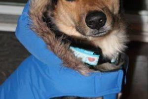 Listo para superar el frío canadiense Foto:Reddit Meaags. Imagen Por: