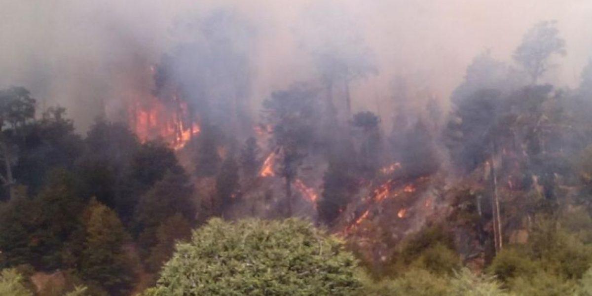Incendio forestal afecta a Reserva Nacional en La Araucanía