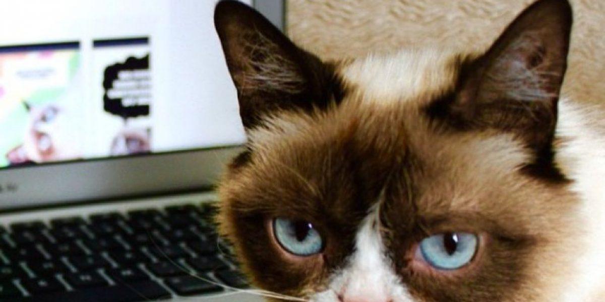 OMG! Científicos crean música perrrfecta para su gato