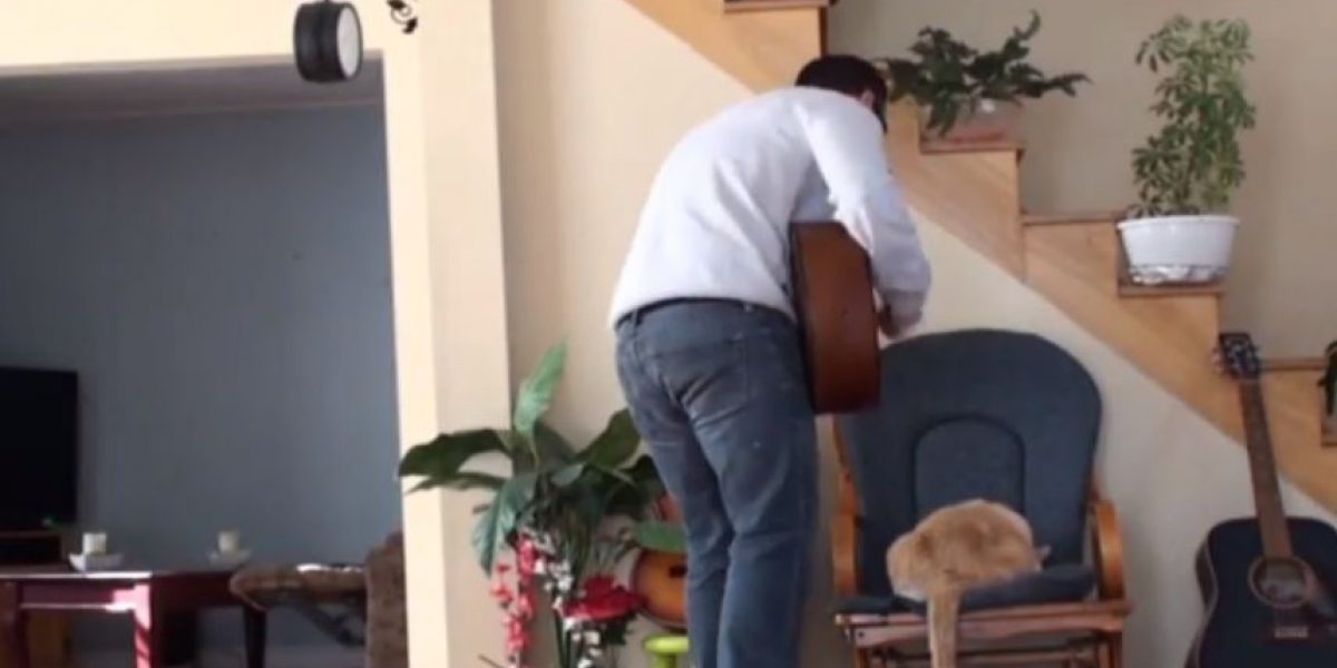 VIDEO: ¡Karma! Así le hace pagar este gato a su dueño por maltratarlo