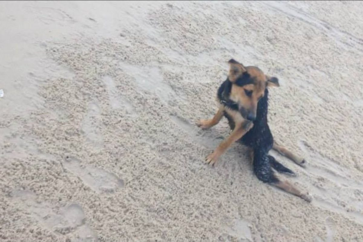 Así fue encontrado en junio de 2014, en la playa Hua Hin de Tailandia Foto:Reddit Meaags. Imagen Por: