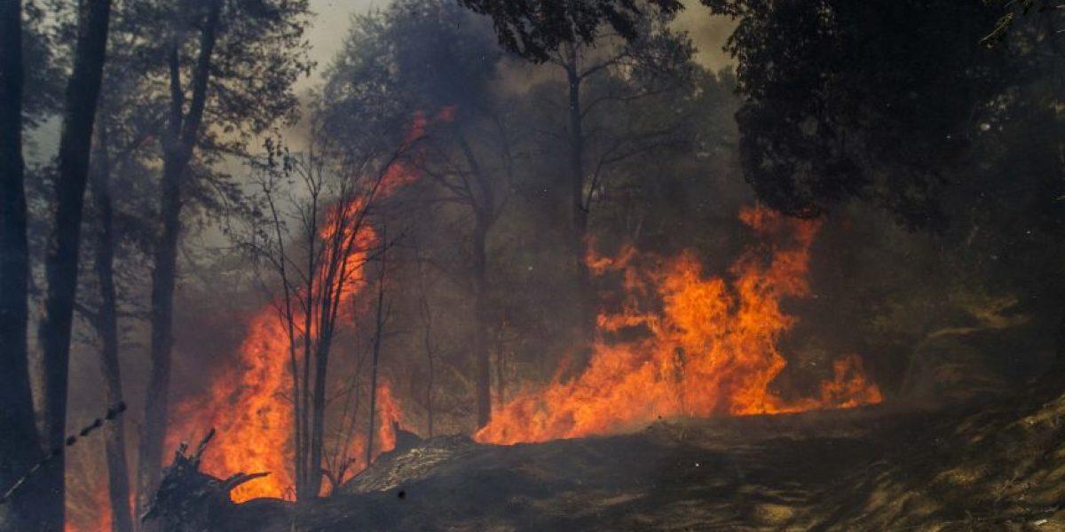 Fotos: Así luce el incendio sin control que afecta a Melipeuco