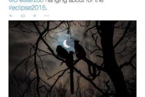 Esta fot, publicada por la BBC, captó en el momento justo a unos lemures casi al final del eclipse. Foto:Twitter @BBCNewsbeat. Imagen Por: