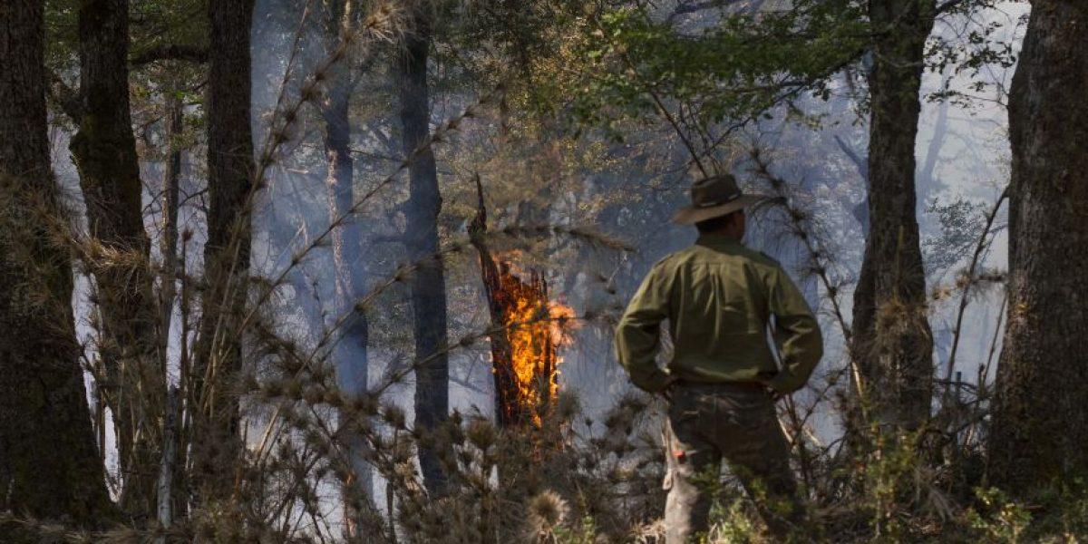 Conaf logra contener incendio forestal en Parque Conguillío