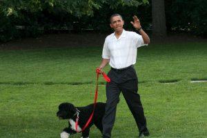 En Estados Unidos fue fundado el National Puppy Day Foto:Getty Images. Imagen Por: