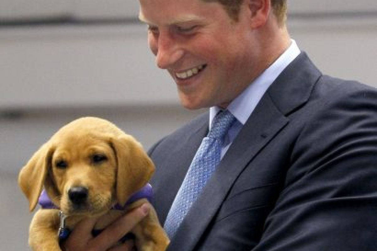 Este pequeño labrador roba la sonrisa del Príncipe Harry Foto:Getty Images. Imagen Por: