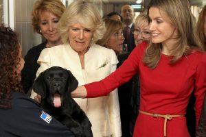 La Reina Letizia y Camila Parker sonríen con este cachorro Foto:Getty Images. Imagen Por: