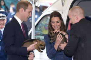 Los Duques de Cambrige disfrutan de acariciar a los pequeños cachorros Foto:Getty Images. Imagen Por: