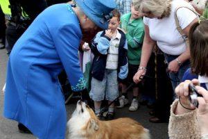 La Reina Isabel II regala unas caricias a sus mascotas Foto:Getty Images. Imagen Por:
