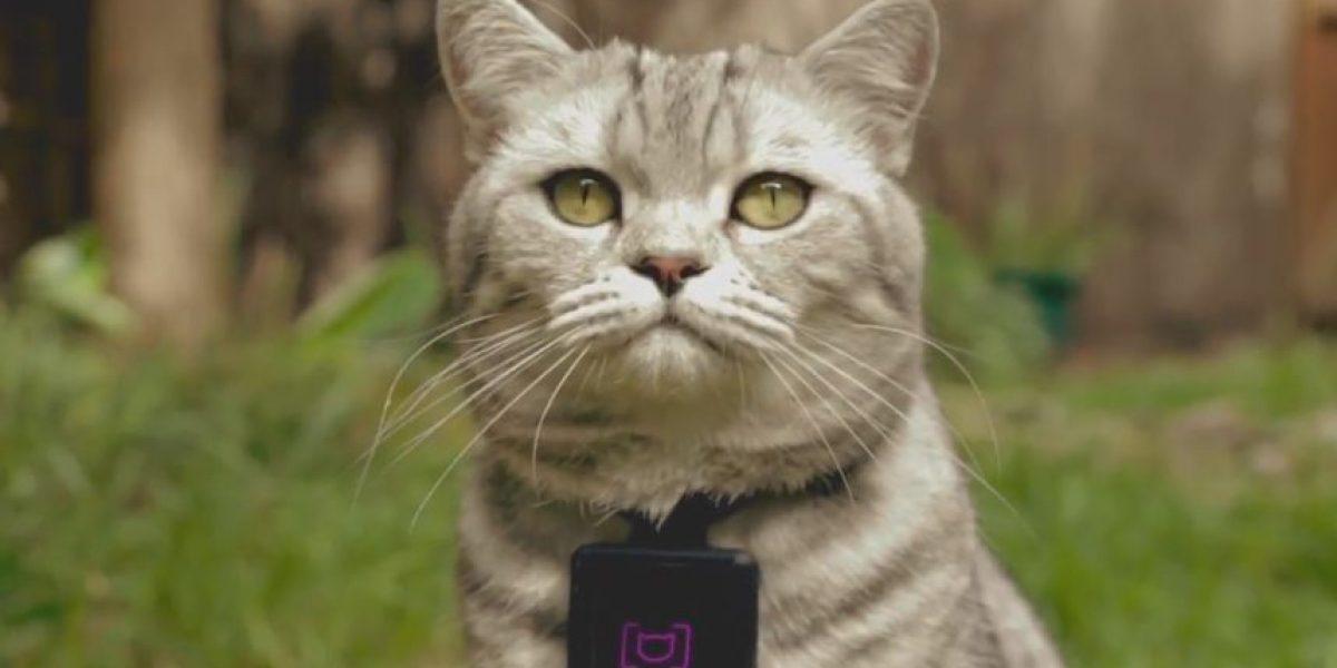 Catstacam: El collar para que gatos suban sus fotos favoritas a Instagram
