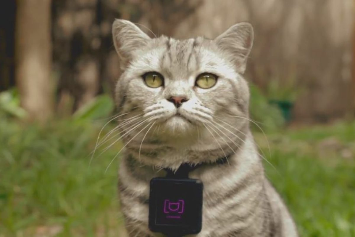 Catstacam toma fotos de lo que hacen sus gatos. Foto:facebook.com/whiskasAU. Imagen Por:
