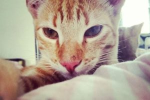 Foto:instagram.com/kittycutie. Imagen Por:
