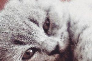 Foto:instagram.com/catselfie_vk. Imagen Por: