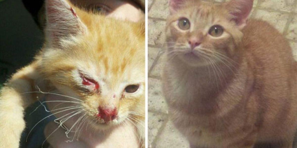 FOTOS: 30 animalitos antes y después de ser rescatados