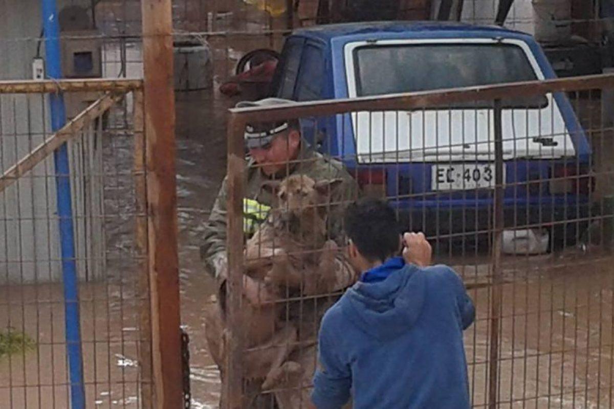 Héroes anónimos que no sólo se dedicaron a ayudar a las personas en la tragedia que afecta a las regiones de Atacama y Antofagasta, han sido constantemente destacadas a través de las redes sociales. Foto:Reproducción Facebook. Imagen Por: