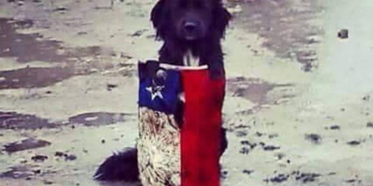 Bandera chilena una vez más se transforma en protagonista de la tragedia