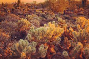 Tomada por Andrew P. en Phoenix, Arizona, con la cámara. Foto:Apple. Imagen Por: