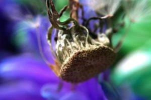 Tomada en Dawn D. en Portland, OR, con la cámara, Snapseed y lentes olloclip. Foto:Apple. Imagen Por: