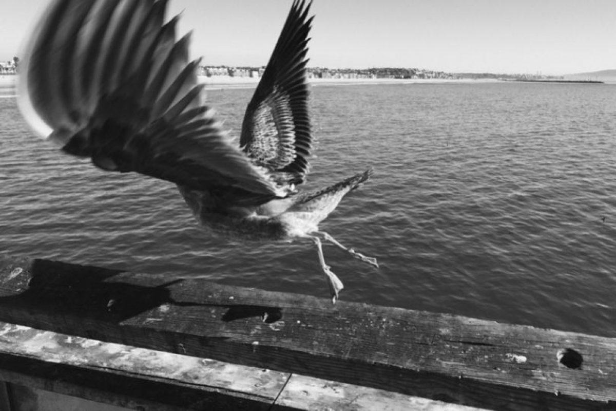 Tomada por Markus S. en Venice Beach, California, con la cámara. Foto:Apple. Imagen Por: