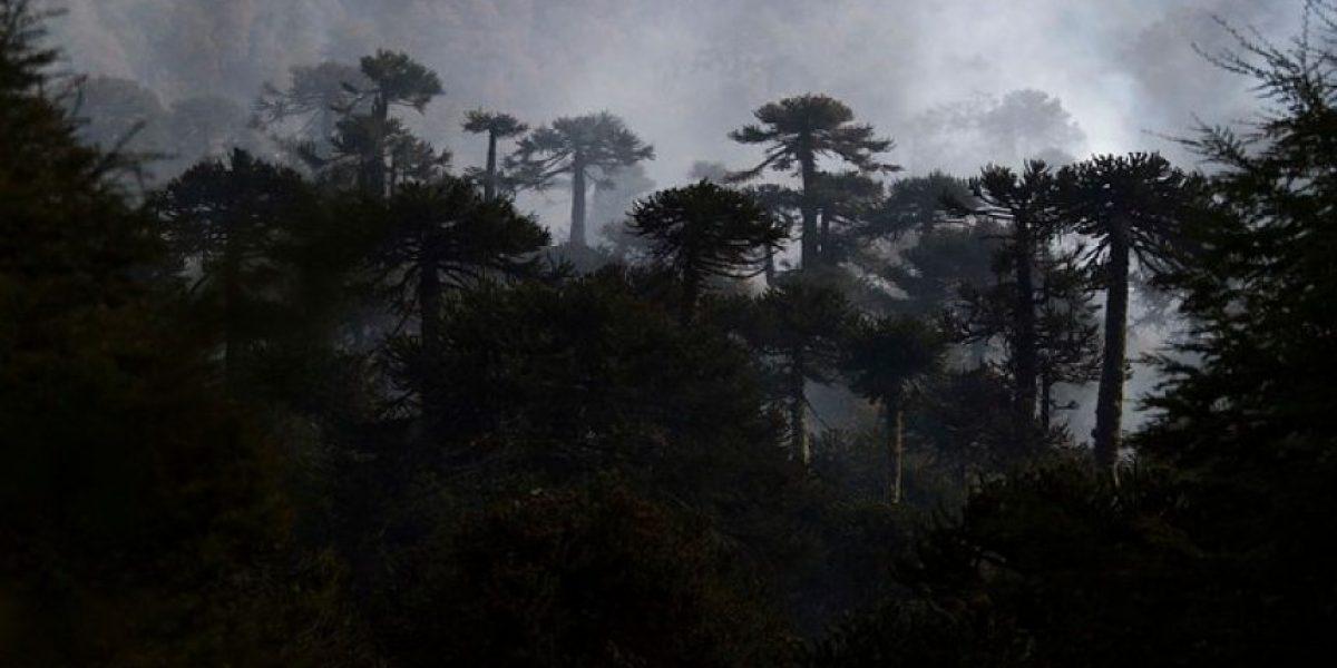 Región de Los Ríos pasa de Alerta Amarilla a Alerta Roja por incendios forestales