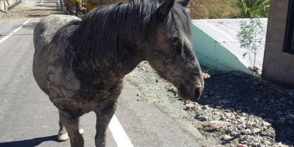 Tragedia en el Norte: así quedó un tierno caballo tras ser salvado luego de pasar horas enterrado en el barro