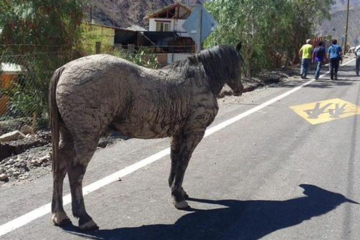 Tragedia en el norte as qued un tierno caballo tras ser for Piletas en zona norte para pasar el dia 2015