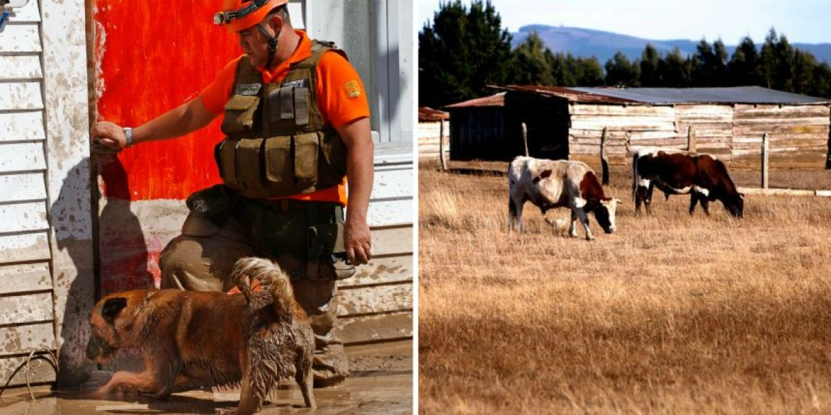 Rescate animal: insumos recibidos irán en ayuda de mascotas en el norte y animales en el sur afectados por sequía