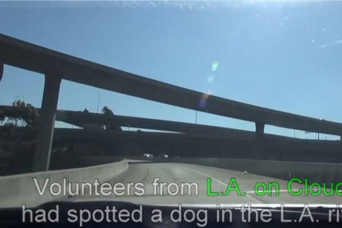 Sucedió en Los Ángeles. Foto:Youtube/Hope for Paws. Imagen Por: